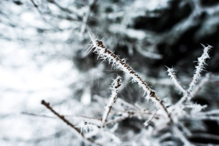 close up view of branches of tree covered with ice in winter