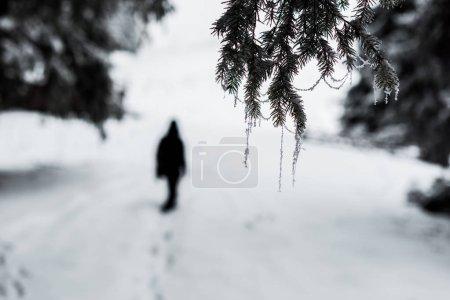 Photo pour Foyer sélectif des branches d'épinette congelées recouvertes de givre et silhouette du voyageur - image libre de droit