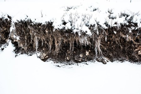 Photo pour Racines, sol et pierres sous neige blanche pure - image libre de droit