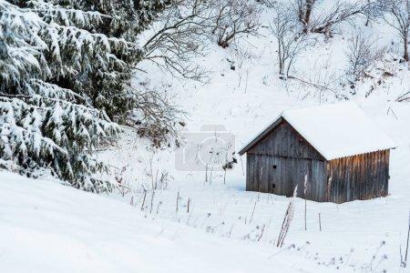 Photo pour Vieillesse maison en bois dans des montagnes enneigées près des arbres - image libre de droit