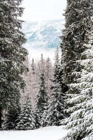 scenic view of snowy mountains with pine trees