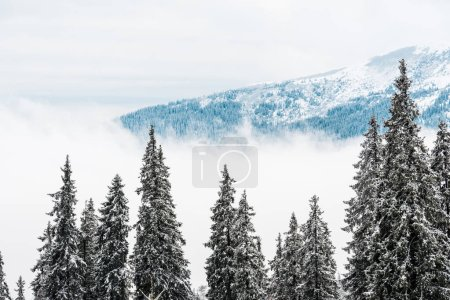 Photo pour Vue panoramique sur les montagnes enneigées avec des pins et des nuages blancs moelleux - image libre de droit
