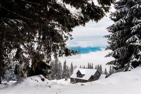 Foto de Vista panorámica de pinos cubiertos de nieve cerca de la casa de madera de montaña. - Imagen libre de derechos