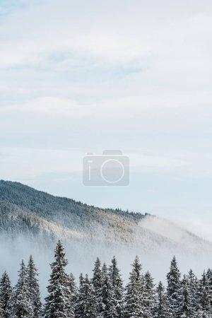 Photo pour Vue panoramique de la montagne enneigée avec ses pins et ses nuages blancs touffus - image libre de droit