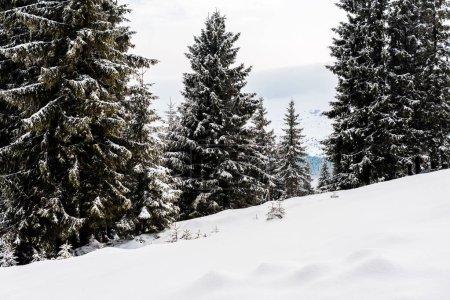 Photo pour Vue panoramique de la montagne enneigée avec ses pins - image libre de droit