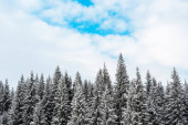 scenic view of pine trees covered with snow and white fluffy clouds