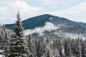 scenic view of snowy mountains with pine trees and white fluffy clouds