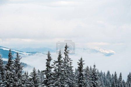 Photo pour Vue panoramique des montagnes enneigées avec des pins et des nuages blancs touffus - image libre de droit