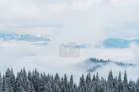 Photo for Scenic view of snowy mountains with pine trees and white fluffy clouds - Royalty Free Image