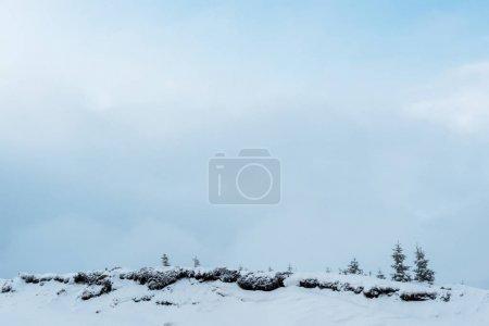 Photo pour Vue panoramique d'une colline enneigée avec des pins et des nuages blancs touffus - image libre de droit