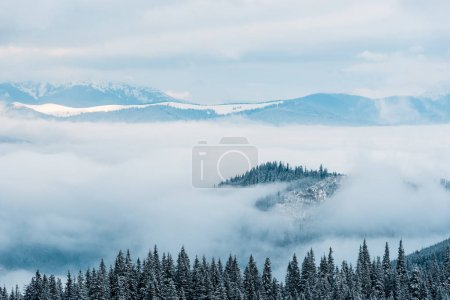 scenic view of snowy mountains with pine trees in white fluffy clouds