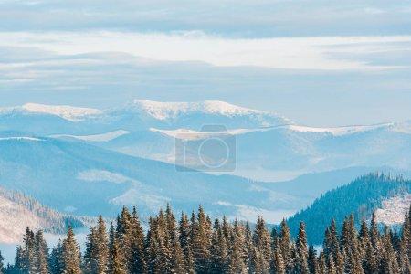 Photo pour Vue panoramique des montagnes enneigées avec des pins au soleil - image libre de droit