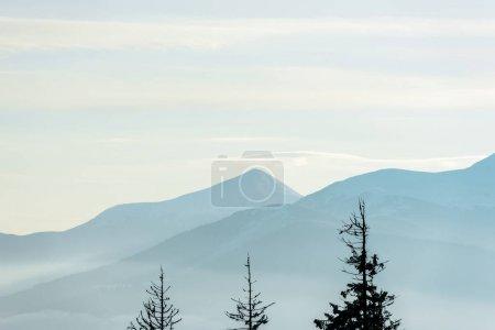 Photo pour Vue panoramique des montagnes avec des pins au soleil - image libre de droit