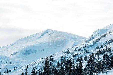 Foto de Vista panorámica de montañas nevadas con pinos de nubes blancas floridas. - Imagen libre de derechos
