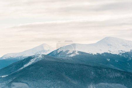 malerischer Blick auf schneebedeckte Berge mit Kiefern in weißen, flauschigen Wolken