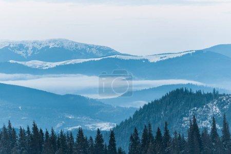 Photo pour Vue panoramique sur les montagnes enneigées avec pins et ciel nuageux - image libre de droit