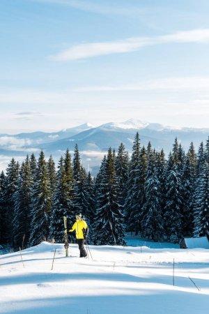 Photo pour Skieur tenant des bâtons de ski et debout sur la neige près des pins - image libre de droit