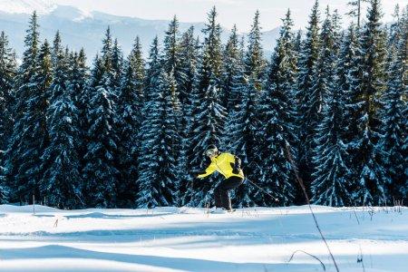 Photo pour Skieur tenant des bâtons de ski et skiant sur la neige près des pins - image libre de droit