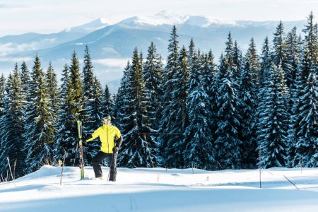Photo for Skier holding ski sticks while standing on snow near firs - Royalty Free Image