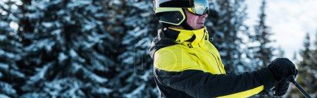 Photo pour Plan panoramique du skieur en lunettes et casque près des pins - image libre de droit