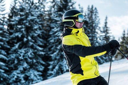 Photo pour Skieur en lunettes et casque près des pins - image libre de droit