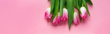 Photo pour Vue du dessus des tulipes sur fond rose, panoramique - image libre de droit