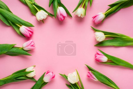 Top view of round frame with tulips on pink background