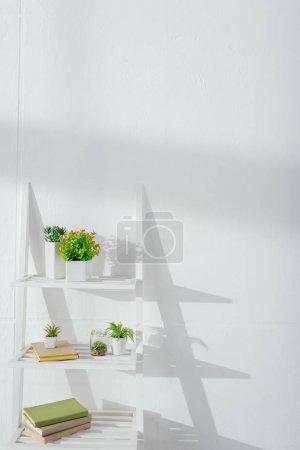 Foto de Plantas y libros en estantería cerca de la pared blanca con luz solar - Imagen libre de derechos