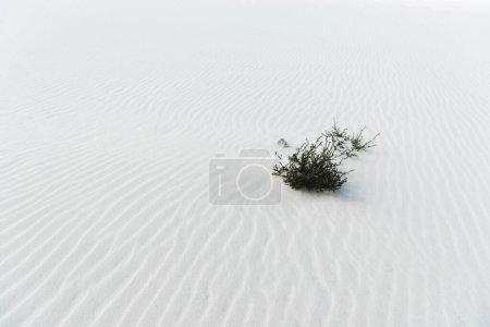 Photo pour Plage avec plante sur sable texturé blanc propre - image libre de droit