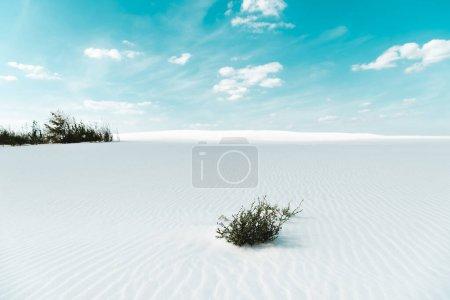 Photo pour Belle plage de sable blanc avec des plantes et ciel bleu avec des nuages blancs - image libre de droit