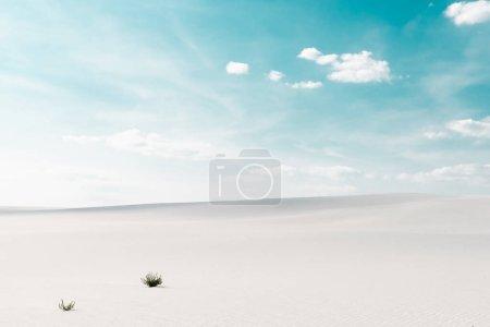 piękna plaża z białym piaskiem z roślinami i błękitne niebo z białymi chmurami