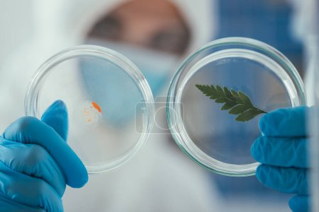 close up view of petri dishes with green leaf and biomaterial in hands of biochemist