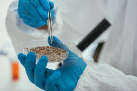 Photo pour Vue partielle du biochimiste prenant une petite pierre de la boîte de Pétri avec une pince à épiler - image libre de droit