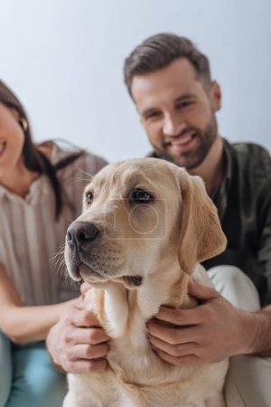 Photo for Selective focus of smiling couple petting golden retriever isolated on grey - Royalty Free Image