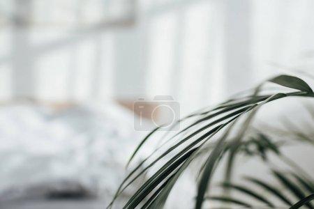 Selective focus of green leaves in bedroom
