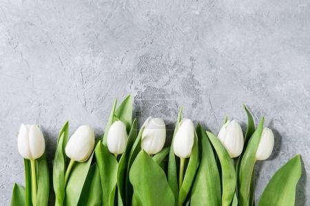 White tulips over grey