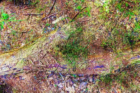 Detailed close up view on autumnal forest ground t...