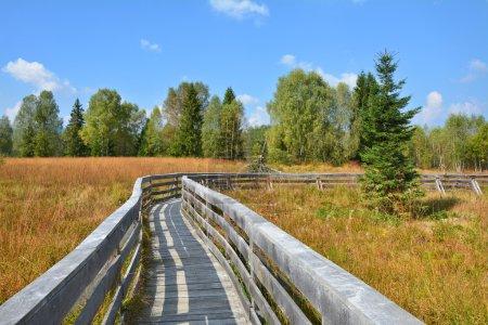 Path through the peat bog