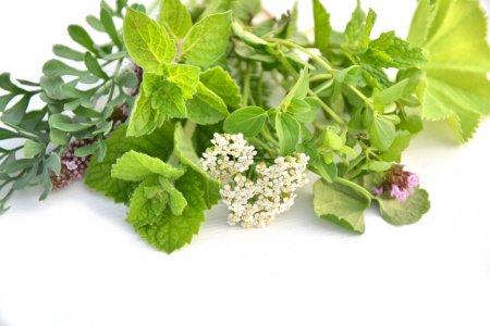 Photo pour Herbes vertes fraîches bouquet isolé sur fond blanc - image libre de droit