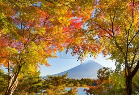 Autumn tree and Mountain Fuji