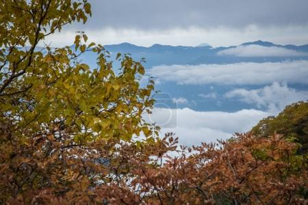 Top of Mount Fuji and autumn trees