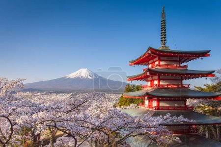 landscape of mountain Fuji and Chureito red pagoda with sakura trees blossom