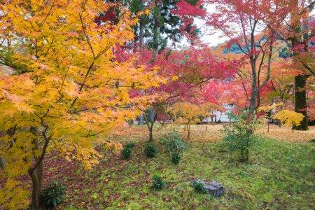 colorful Japanese garden in autumn season
