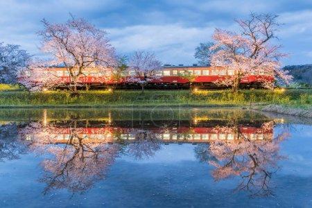 Kominato Tetsudo Train and Sakura cherry blossom with light up in spring season, Japan.