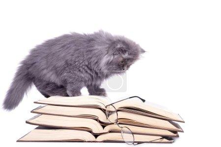 Cute little kitten and books