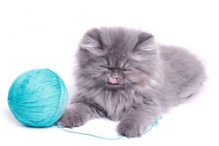 Cute little kitten and ball of yarn