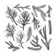 Set of pine tree branches isolated on white backgr...