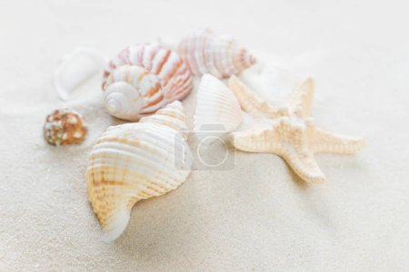 Clams and starfishes on thesea sand