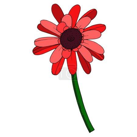 Illustration pour Vecteur Gerbera fleur botanique florale. Feuille sauvage de printemps fleur sauvage isolée. Encre gravée en noir et blanc. Elément d'illustration gerbera isolé sur fond blanc . - image libre de droit