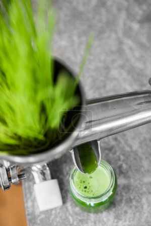 Wheatgrass in Action on the Kitchen Countertop using a Juicer